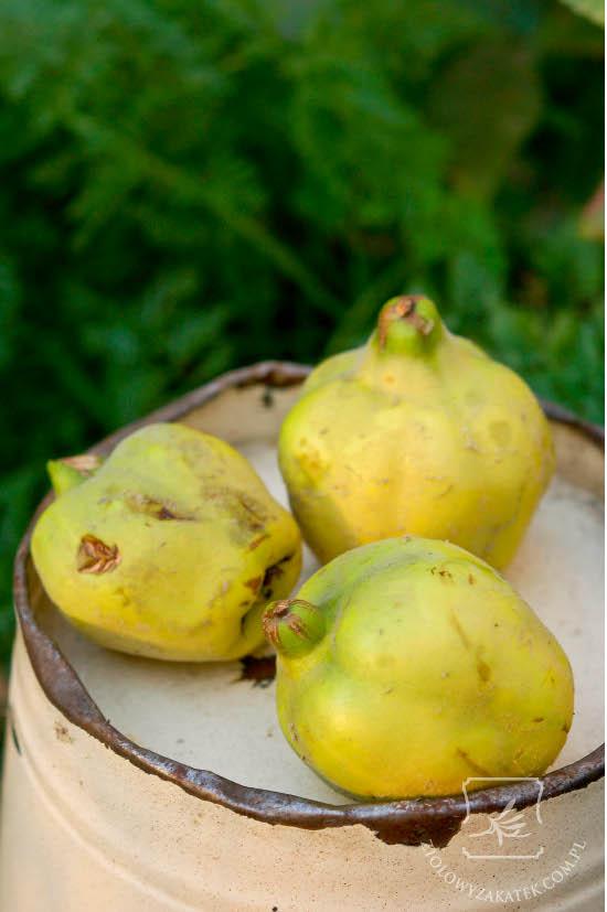Pigwa owoc