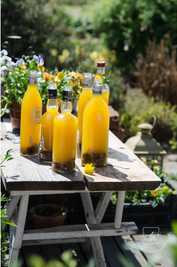 Dandelion wine recipe – oh, so sunny!