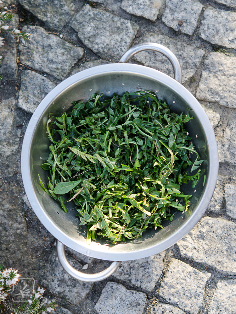 salatka-mlecz-mini-3
