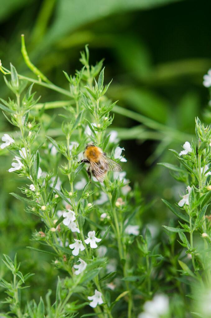 pszczoly-kwiaty-4725
