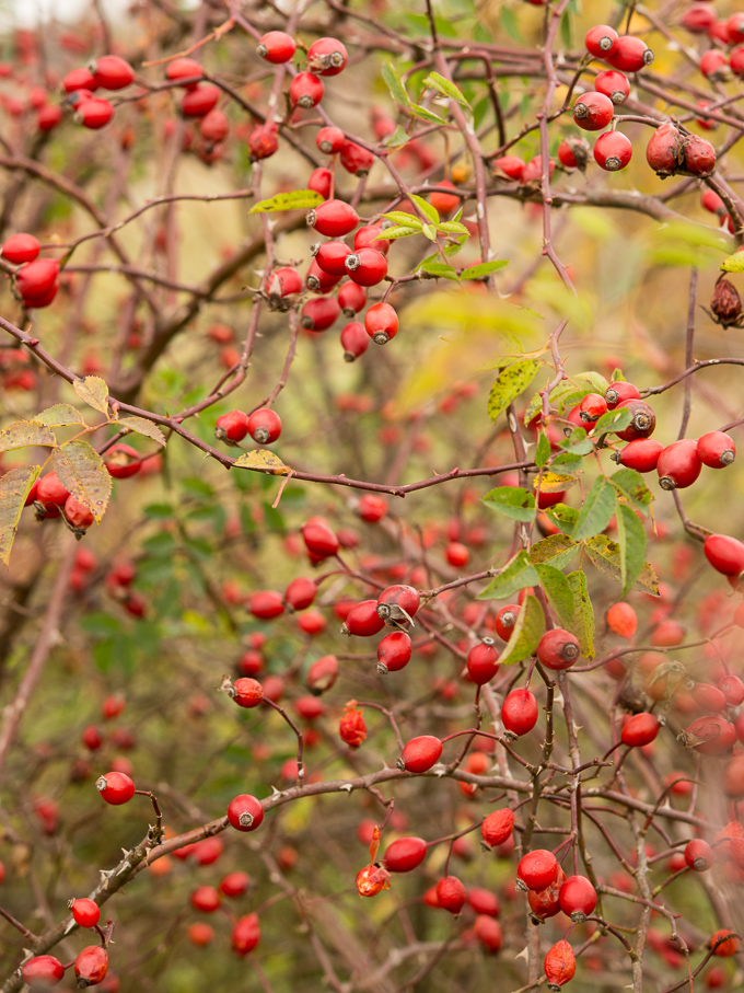 jesieni-owoce (2 of 2)
