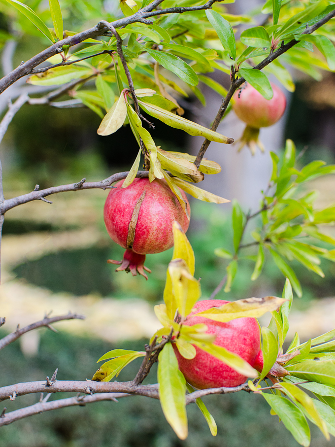 owoce-granatu