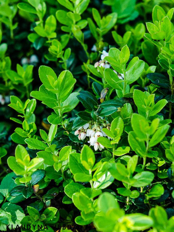 rzucanie-palenia (1 of 1)-2