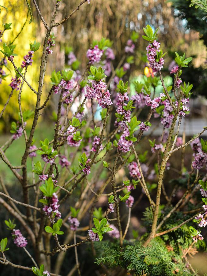 kwiaty-wiosna (2 of 14)