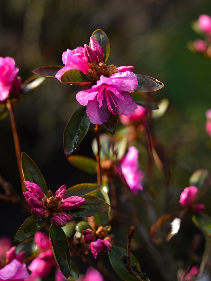 kwiaty-wiosna (3 of 14)