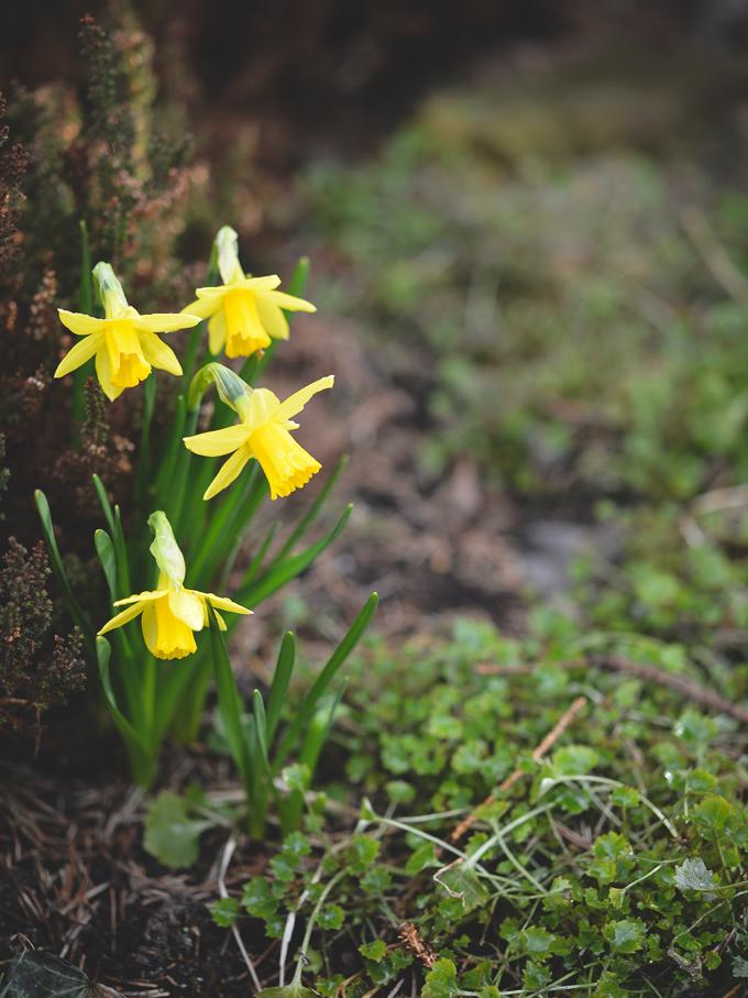 kwiaty-wiosna (9 of 14)