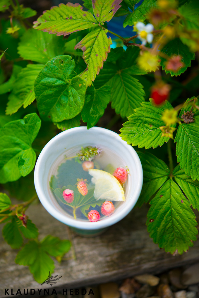 herbatka-poziomkowa (1 of 1)-6