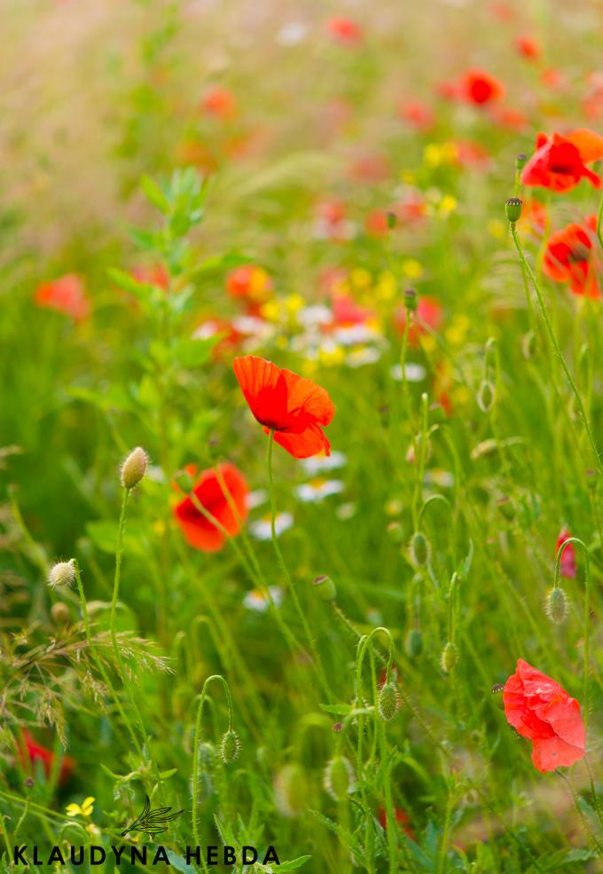 Projekt na lato: zrób sobie wodę kwiatową!