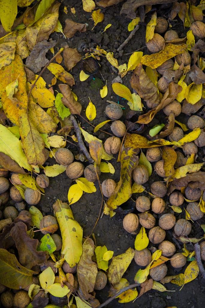 jesienny-ogrod-5795