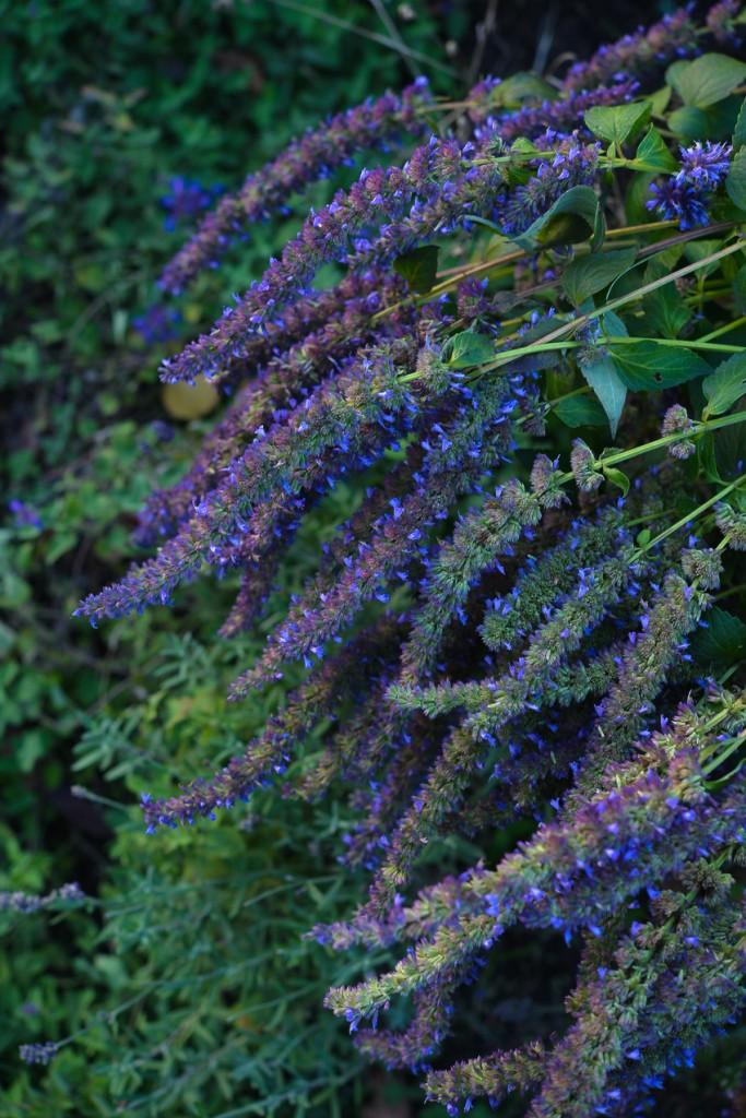 jesienny-ogrod-5901