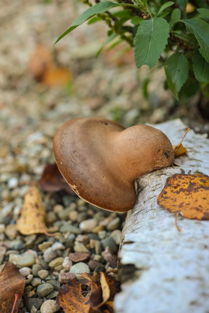 jesienny-ogrod-5912