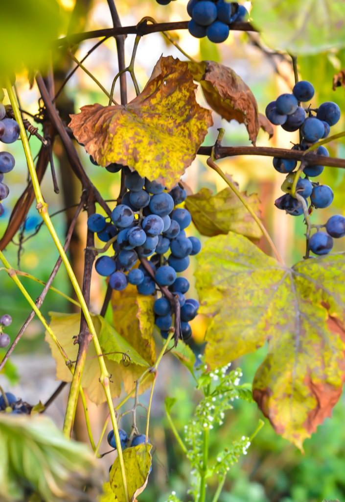 jesienny-ogrod-5926