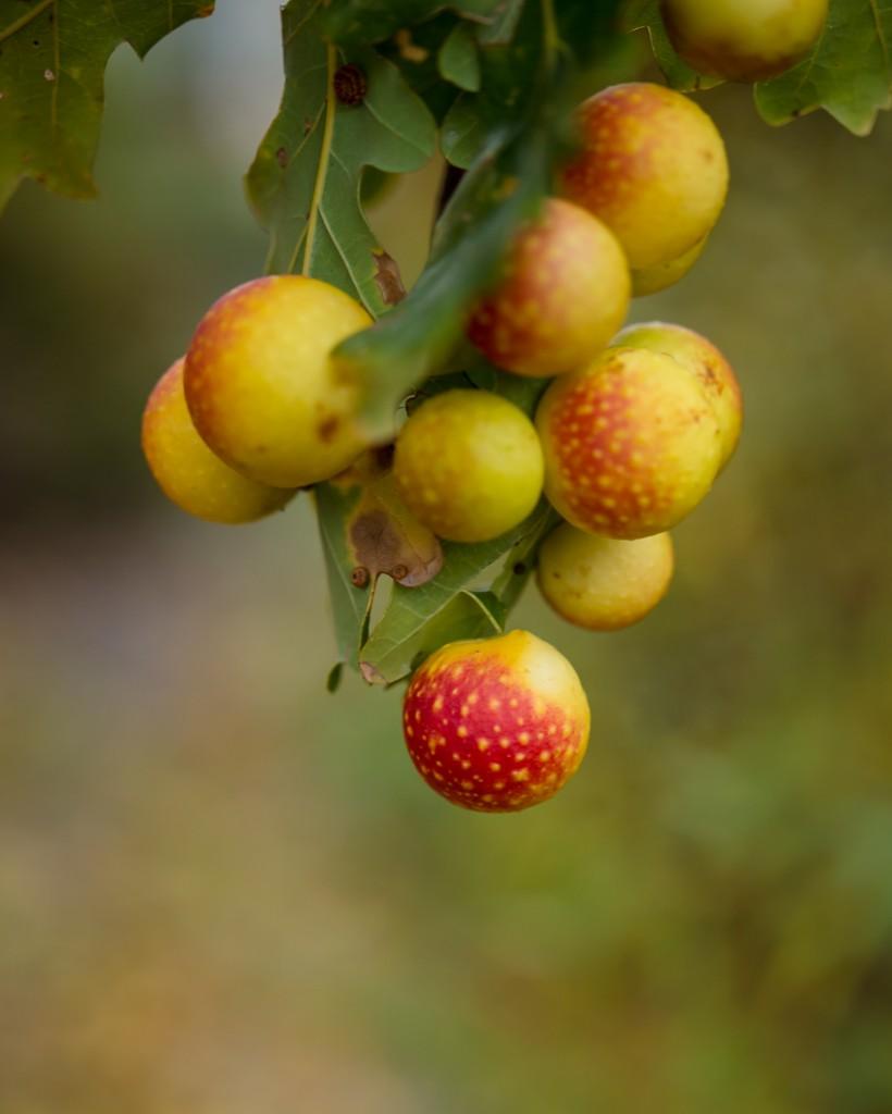 jesienny-ogrod-5992