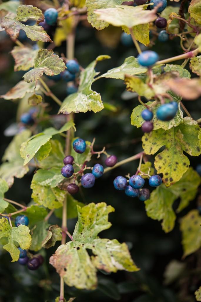 jesienny-ogrod-6011
