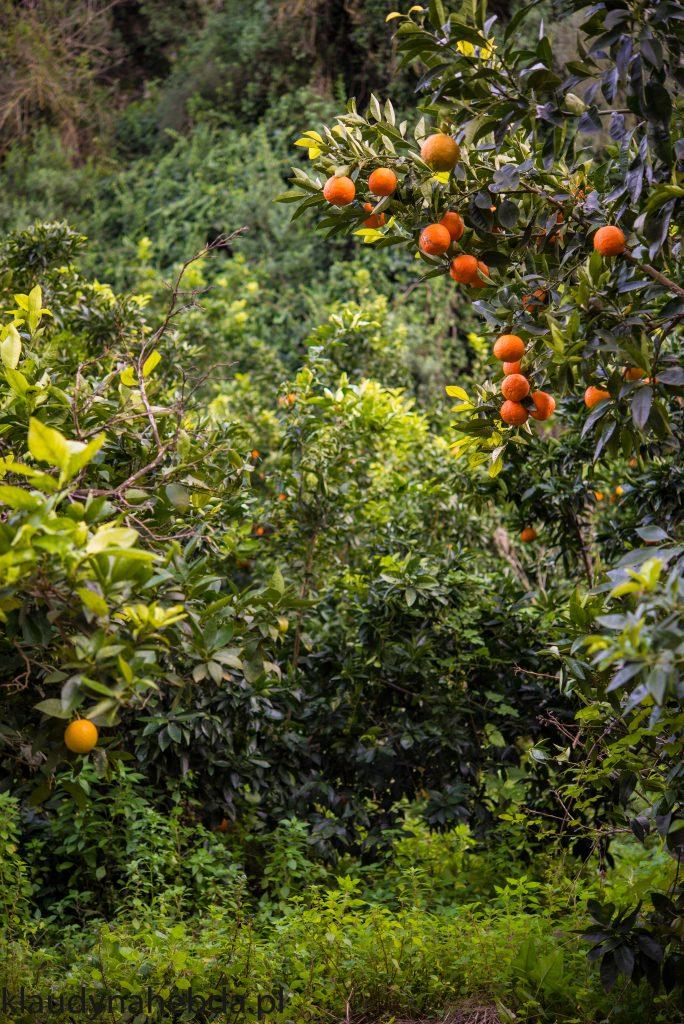 Witaj w pomarańczowym gaju! [Sycylia]
