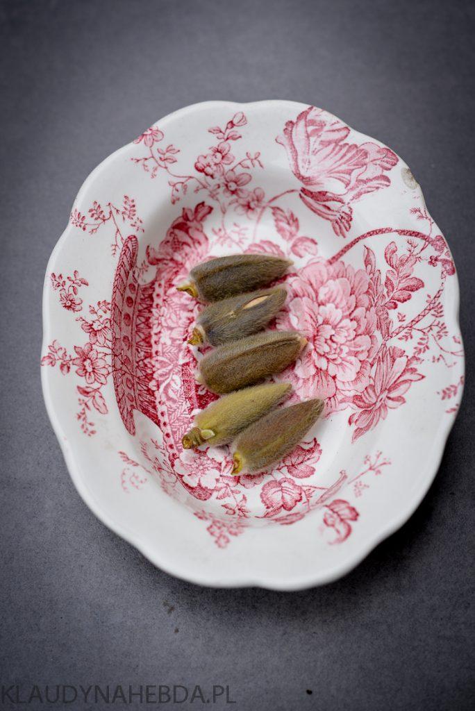 paczki-magnolii-8826