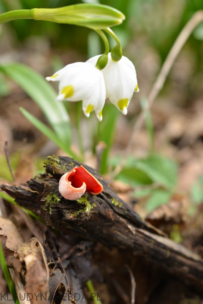 Witaj wiosno! [uczta dla oka]