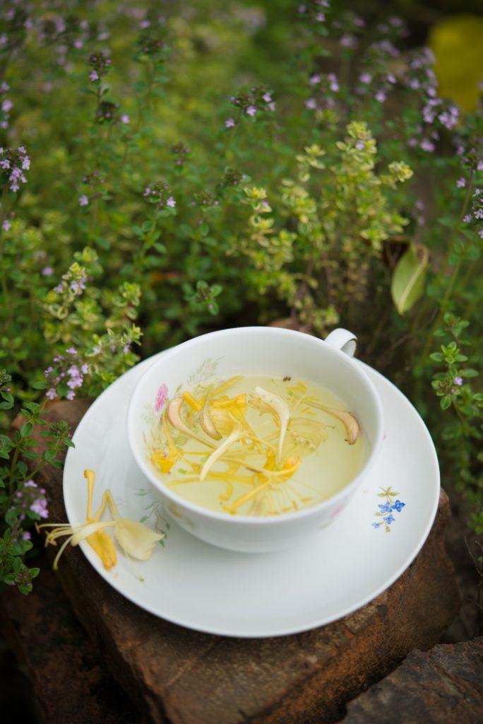 Powitanie lata: herbatka z wiciokrzewu!