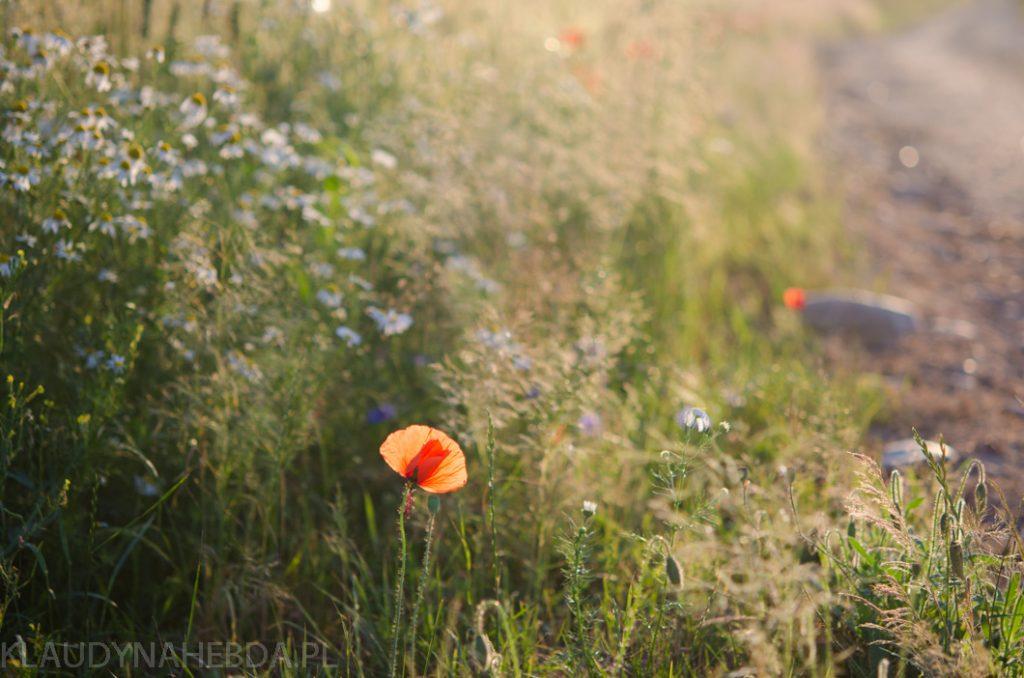 lato-obrazy-5772