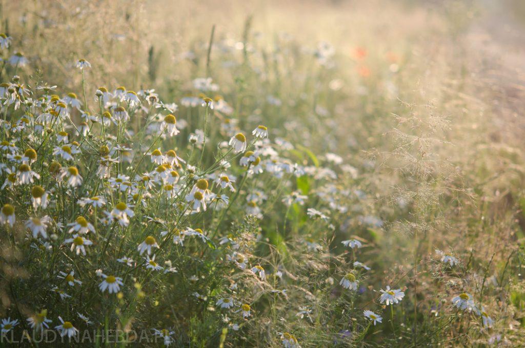 lato-obrazy-5780