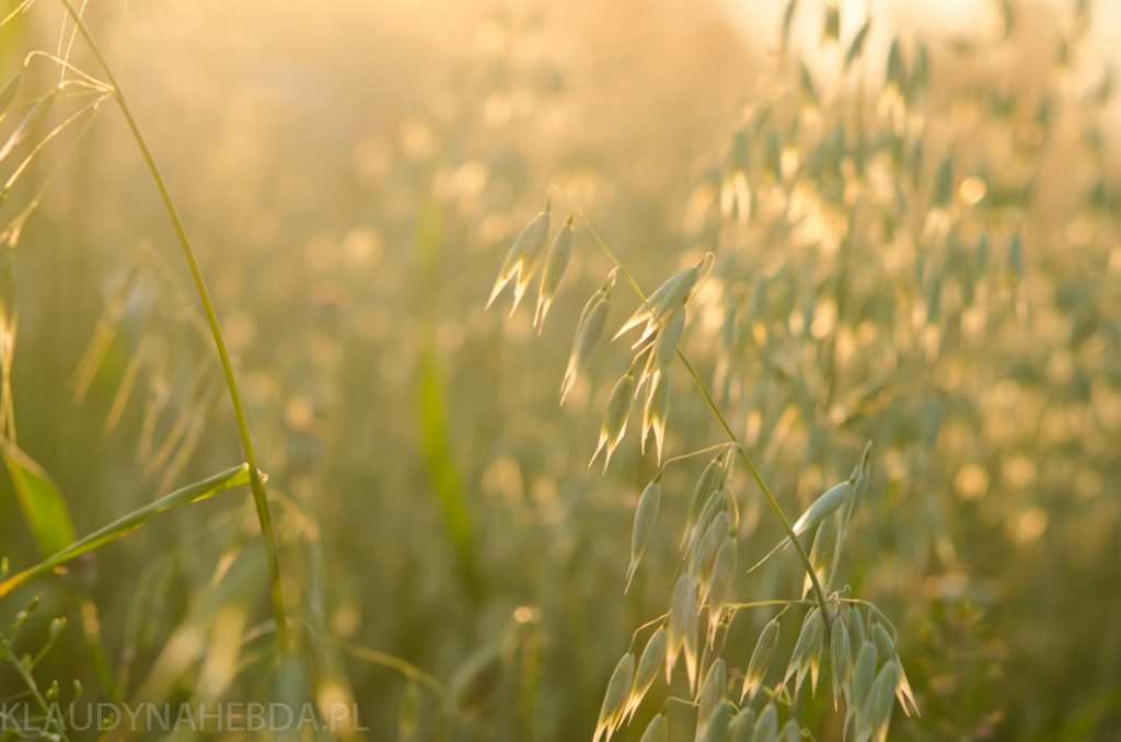 lato-obrazy-5824