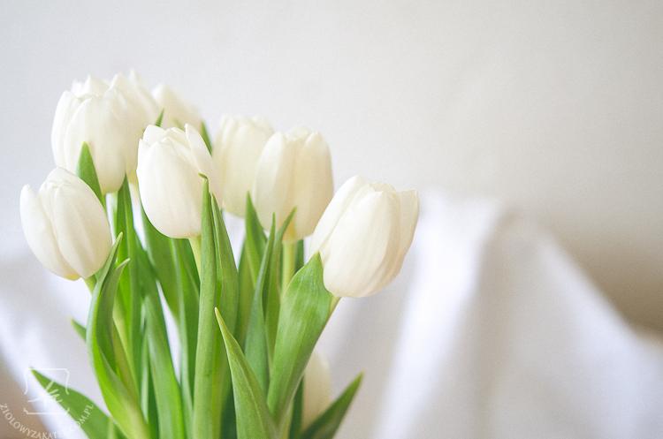 tulipan-mini-3
