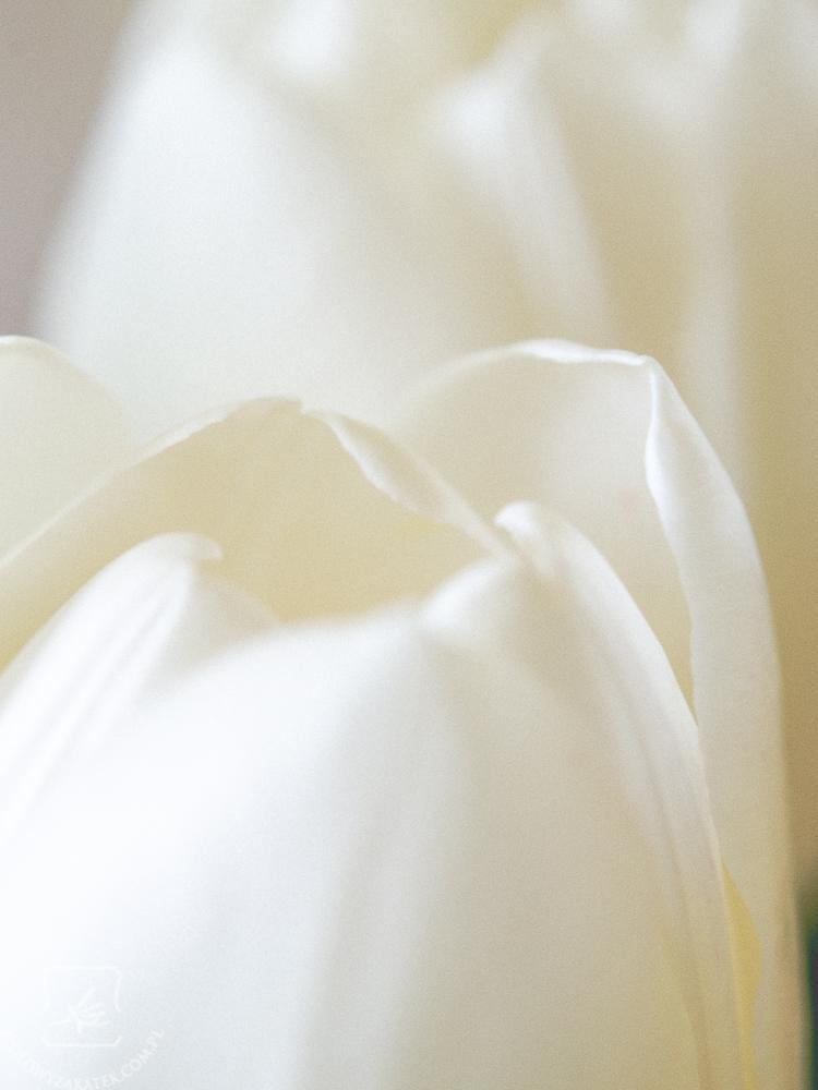 tulipan-mini-4