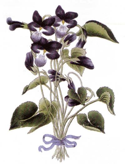 """Jean-Dominique Etienne Canu. Le Secret du Caporal La Violette. Gravue de 1815. On y voit le profil de Napoléon surnommé """"caporal la violette"""", sa femme et son fils."""