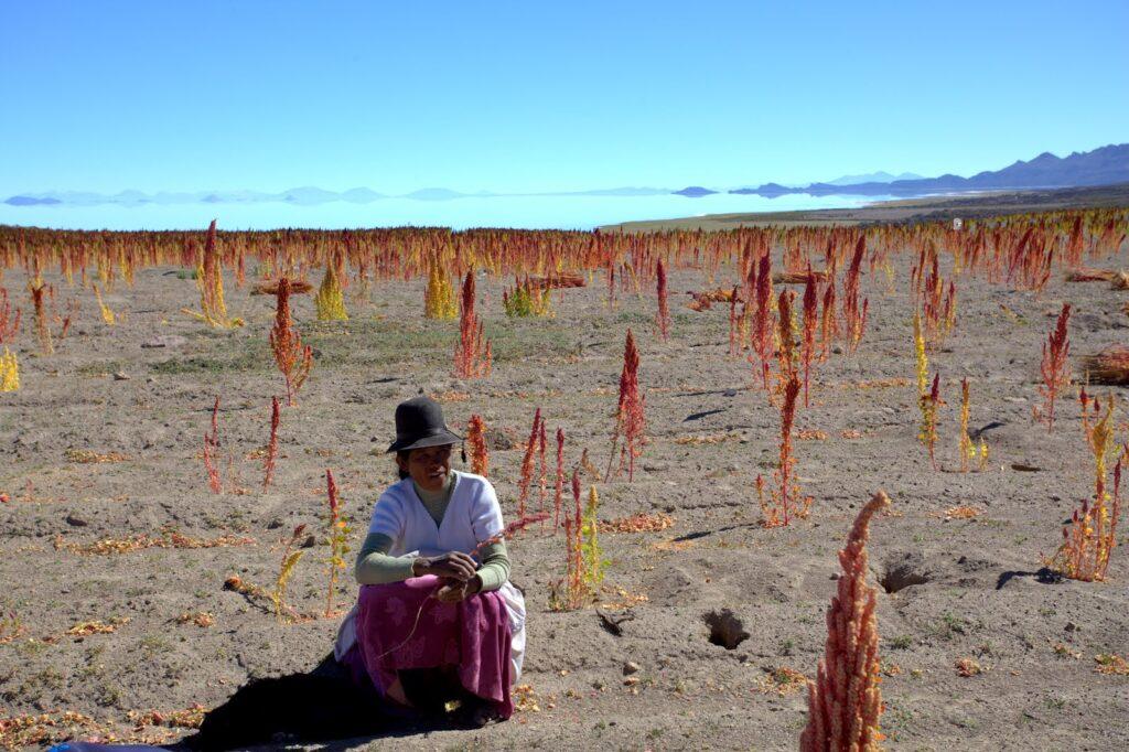 quinoa-field-farmer
