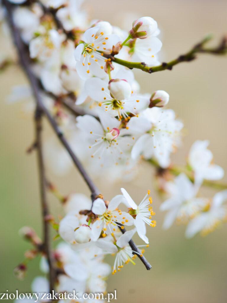 Jak naturalnie poradzić sobie z wiosennym przemęczeniem?