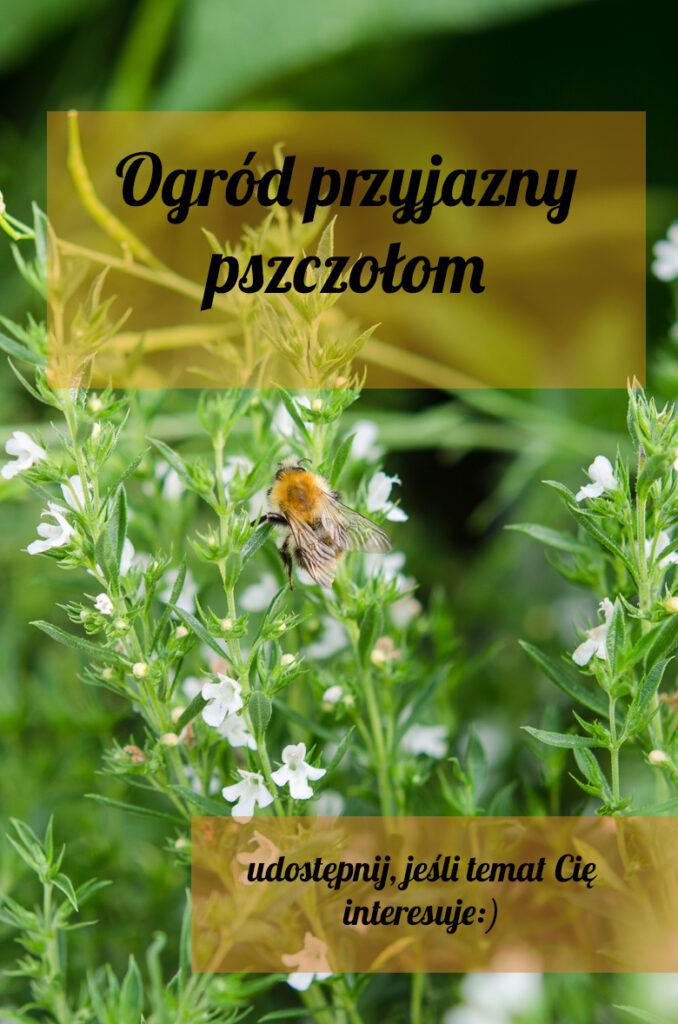 ogrod-przyjazny-pszczolom