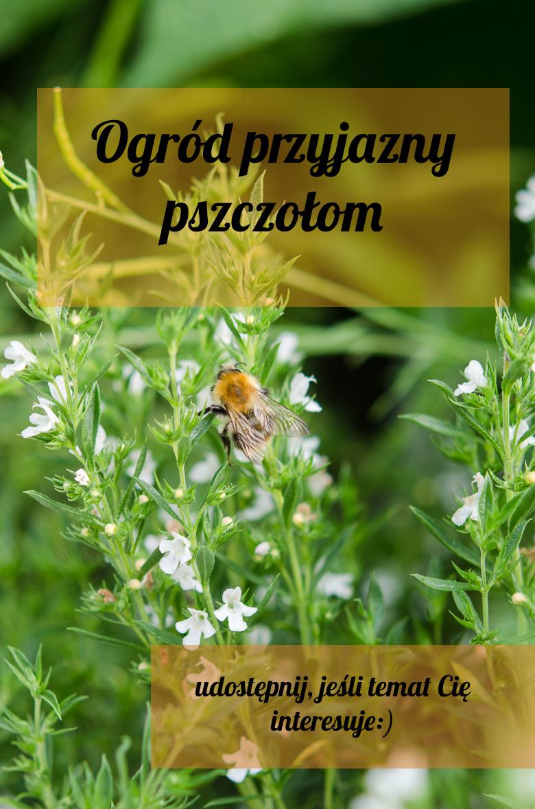 Co Kochaja Pszczoly Czyli Kilka Slow O Ogrodzie Przyjaznym Pszczolom Klaudyna Hebda Blog