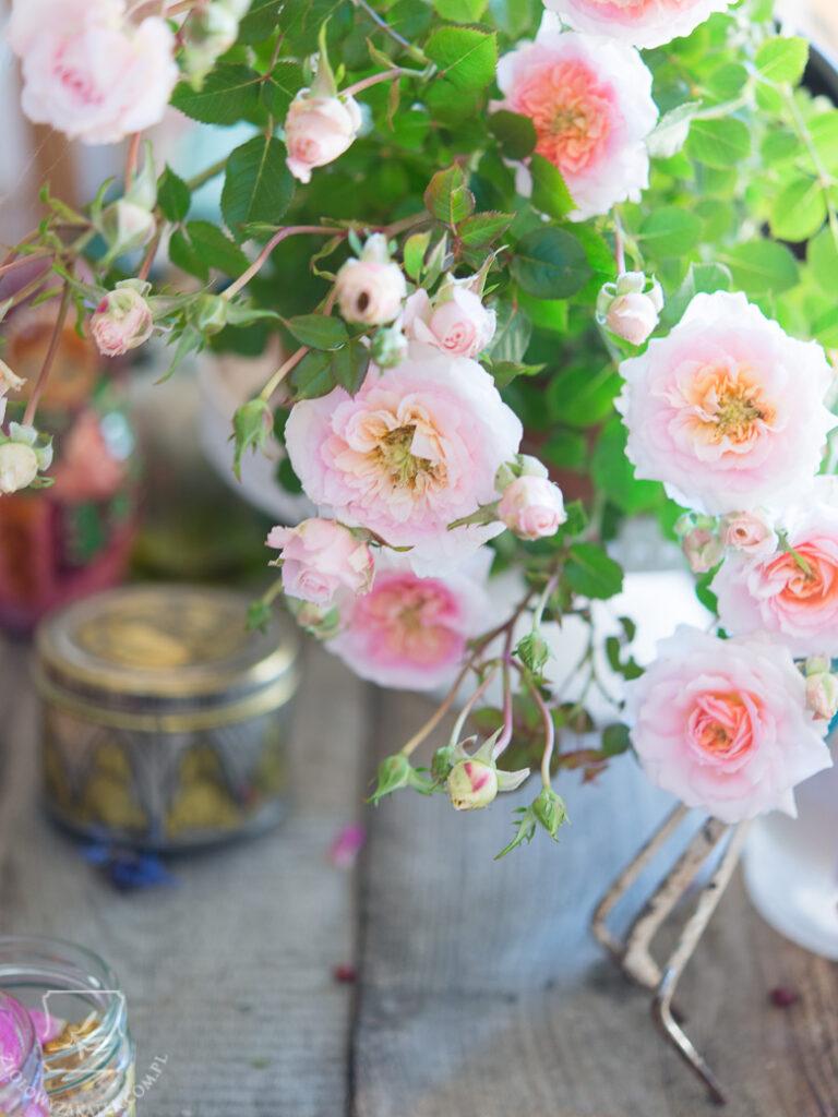 roza-elisir-1246