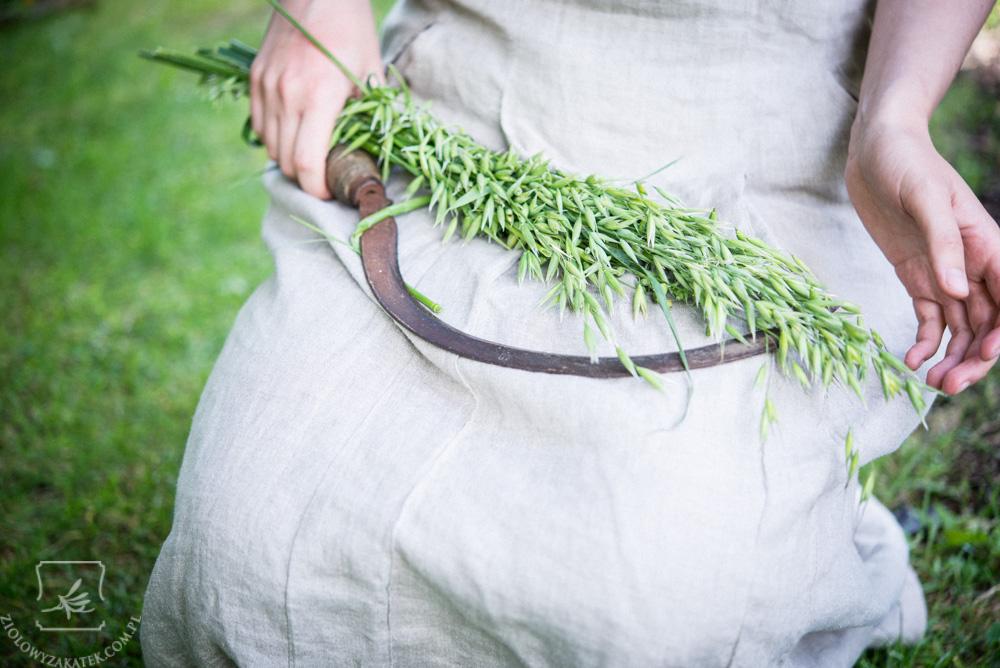 Zioła dopieszczające płuca ziele-owsa
