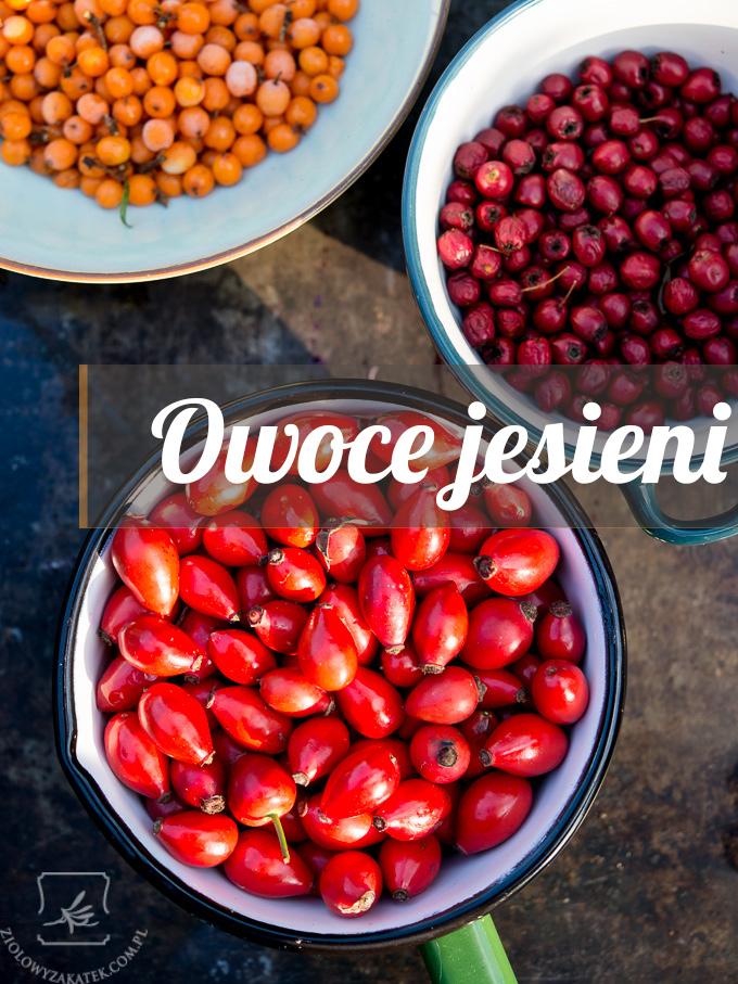owoce-jesieni-intro