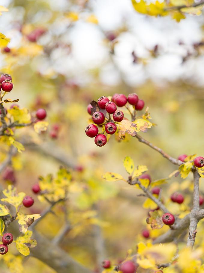 jesieni-owoce (1 of 2)