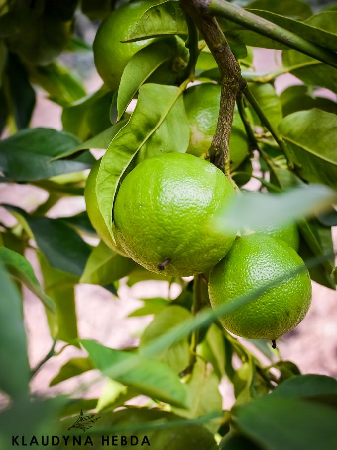 bergamota (1 of 1)