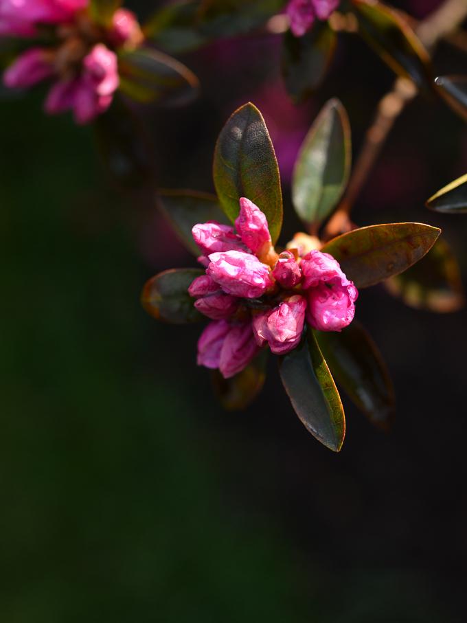 kwiaty-wiosna (4 of 14)