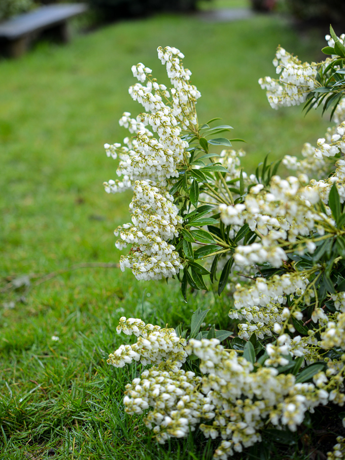 kwiaty-wiosna (5 of 14)