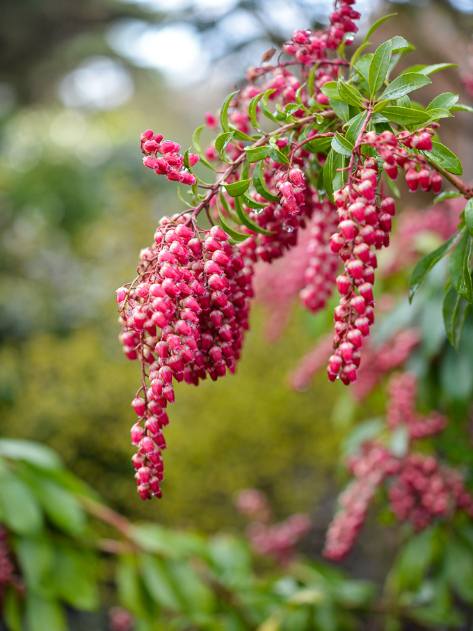 kwiaty-wiosna (6 of 14)