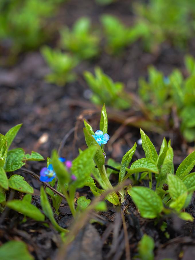 kwiaty-wiosna (7 of 14)