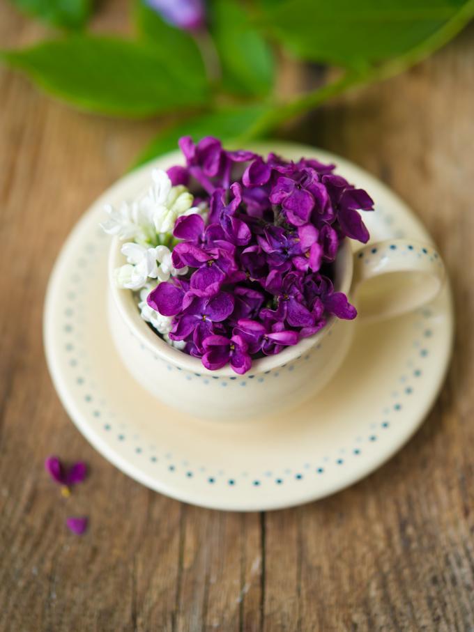 bez-lilak-herbata (1 of 5)