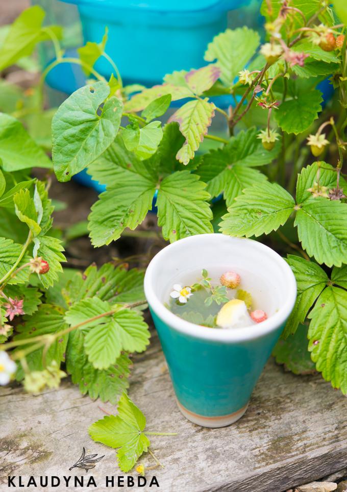 Wszystko co musisz wiedzieć o letnich herbatkach ziołowych!