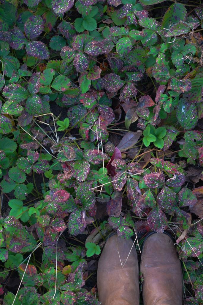 jesienny-ogrod-5934
