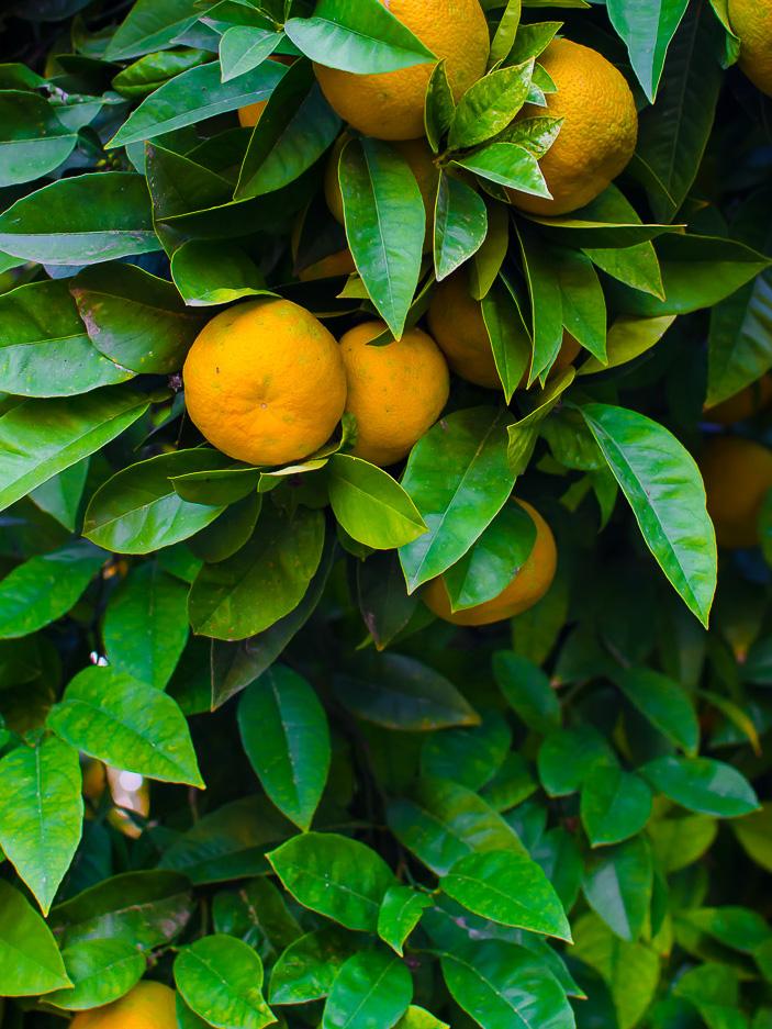 pomarancze (1 of 1)