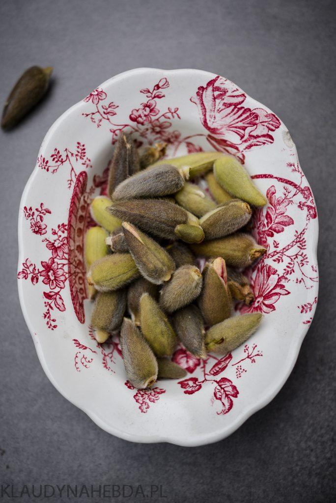 Zbierz pączki magnolii [alergia/zatoki/katar]